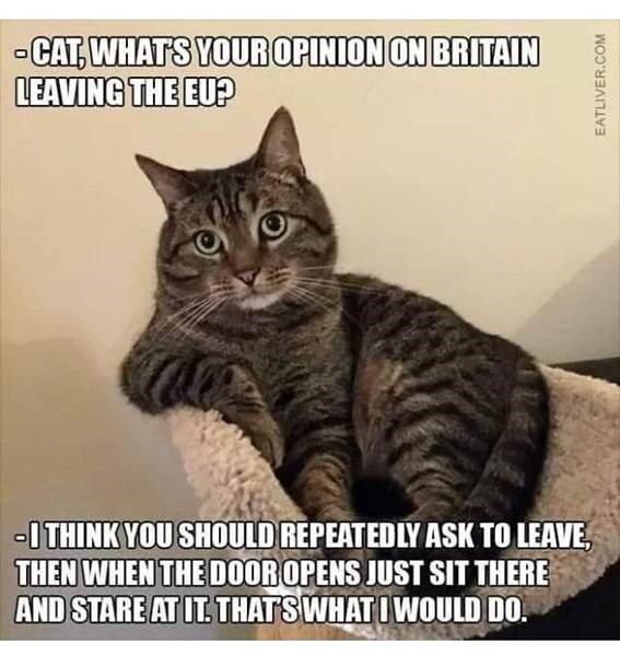 Brexit Cat.jpg