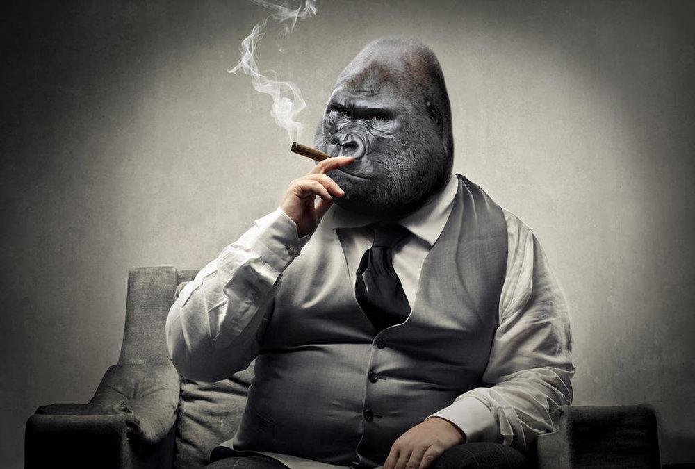 gorilla_in_suit_by_oatsie77_dbje6qd-fullview.jpg