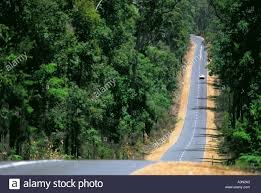 forest road.jpg